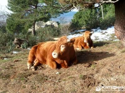 Siete Picos - Valle la Fuenfría; fedme; rutas senderismo madrid